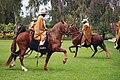 Lima Caballos de Paso 0059.jpg