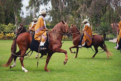 Lima Caballos de Paso 0059