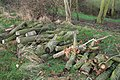 Log pile by the River Devon - geograph.org.uk - 652450.jpg
