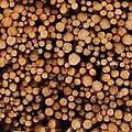 Logs in a log pile - geograph.org.uk - 530134.jpg