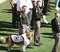 Lone Star Showdown 2006 Reveille of TAMU.jpg