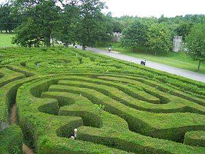 Hedge maze - Close-up of Longleat hedge maze