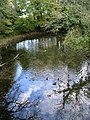 Looking E along river from Swanbourne Lake - geograph.org.uk - 1020005.jpg