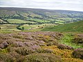 Looking into Farndale from the moor - geograph.org.uk - 214861.jpg
