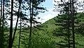 Lukovit, Bulgaria - panoramio (33).jpg