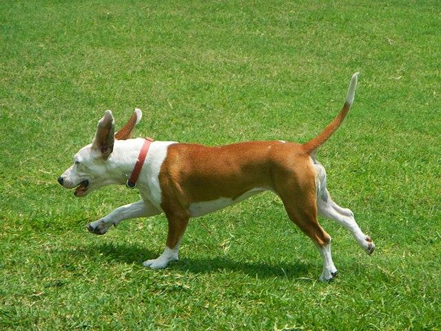 perro-come-hierba