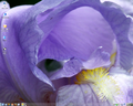 MEPIS 8.01 KDE3.5o.png