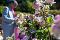 Mañana último día para votar tu rosa favorita en el Concurso Popular Rosa de Madrid 03.jpg