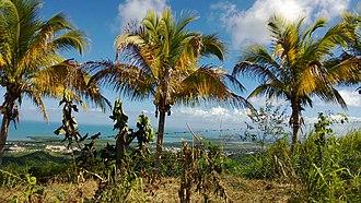 Ceiba, Puerto Rico - Image: Machos, Ceiba, Puerto Rico panoramio