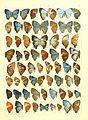 Macrolepidoptera15seit 0323.jpg