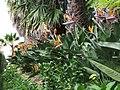Madeira - Monte - Jardim Tropico (2092630473).jpg
