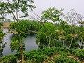 Madhobpur Lake,Moulovibazar2.jpg