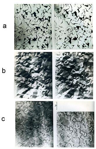 Heusler compound - Image: Magnetic Domains on Antiphase Boundaries in Heusler Alloy