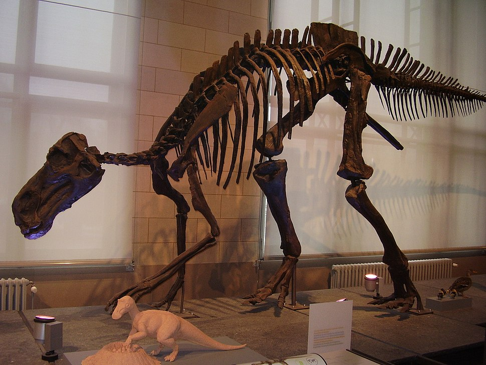 Maiasaura skeleton