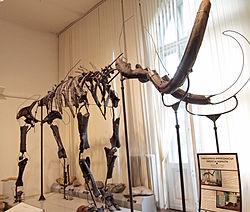 Mammuth skeleton.jpg