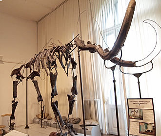 Slovenian Museum of Natural History - The wooly mammoth skeleton that was found in 1938 in Nevlje is one of the best preserved in Europe and the symbol of the Natural History Museum of Slovenia.