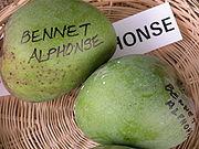 Mango BennetAlphonso Asit fs.jpg