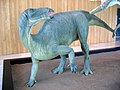 Mantellisaurus model - Castilla-La Mancha Paleontological Museum (Cuenca, Spain).jpg
