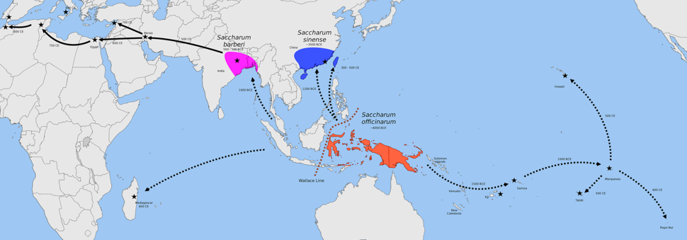 Map showing centers of origin of Saccharum officinarum in New Guinea, S. sinensis in China, and S. barberi in India