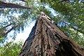 Marin County, CA, USA - panoramio (54).jpg