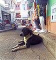 Marinilla Colombia - Street Dogs Perros Callejeros 12.jpg