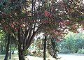 Martenitsa-tree.jpg