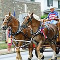 Matched Set of Belgian Draft Horses.jpg