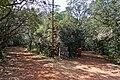 Matheran - panoramio (8).jpg
