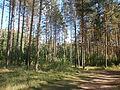 Meža parks Jēkabpilī 02.JPG