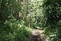 Meden Vale Nature Trail - geograph.org.uk - 855537.jpg