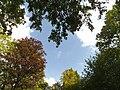 Merkurwald - panoramio.jpg