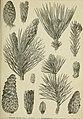 Meyers Konversations-Lexikon - eine Encyklopädie des allgemeinen Wissens (1890) (14577750677).jpg