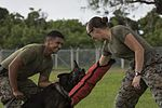 Military Working Dog Training 161025-M-MJ974-300.jpg