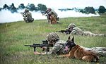 Military Working Dogs undergo Live Fire Tactical Training. MOD 45160265.jpg
