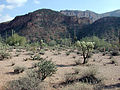 Mineral mountains arizona.jpg