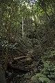 Minnamurra Rainforest - panoramio (34).jpg
