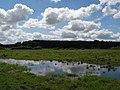 Mokre łąki 2 - panoramio.jpg