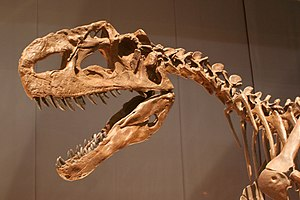 Fossil reconstruction of Monolophosaurus jiangi