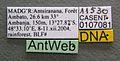 Monomorium termitobium casent0107081 label 1.jpg