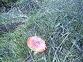 More Fungi - geograph.org.uk - 325381.jpg