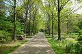 Morris Arboretum - DSC00515.JPG