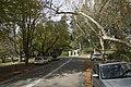 Mount Wilson NSW 2786, Australia - panoramio (32).jpg