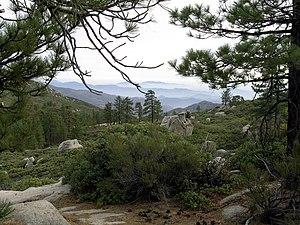 Sierra de San Pedro Mártir - Sierra Juarez and San Pedro Martir pine-oak forests ecoregion flora.