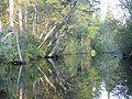 Mullica River 3.jpg