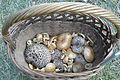 Mushrooms of Jastrzebsko forests (3).JPG