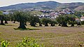 Muxagata com oliveiras (4497311791) (3).jpg