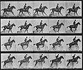 Muybridge, Eadweard - Daisy überspringt eine Hürde (1) (Zeno Fotografie).jpg