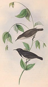 Illustration of a brown female and black male on a plant