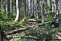 NPR Boubínský prales 20120910 15.jpg