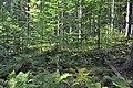 NPR Boubínský prales 20120910 25.jpg
